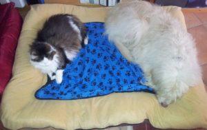 Lilou und Mietzi
